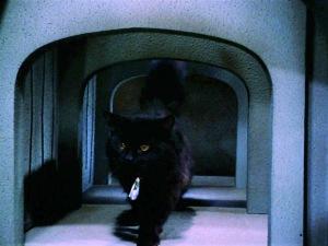 catspawhd1192